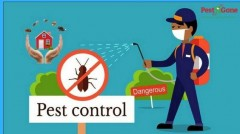 Looking For The Best Bed Bugs Exterminator? Effective Treatments By Pest R Gone!